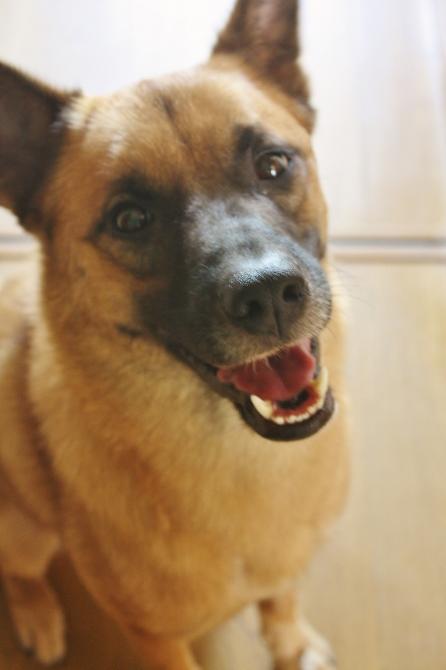 例外犬タランティーノ