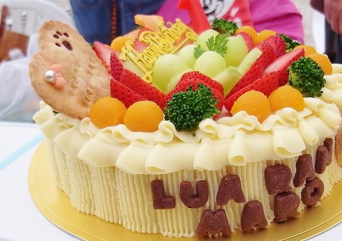 ゴージャス犬用ケーキ