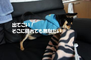 2_convert_20110124165733.jpg