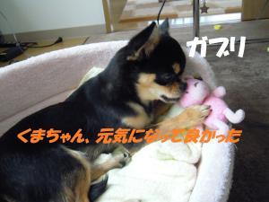 DSCN0252_convert_20110620163155.jpg