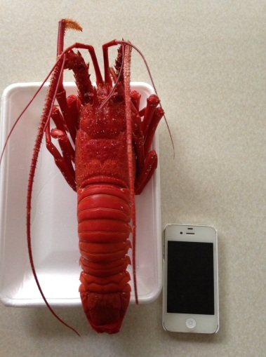 spring lobster
