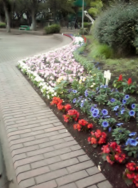 植えたばかりの花壇のお花