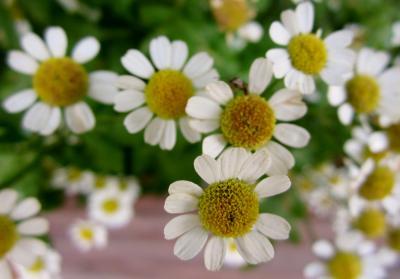 みぃーつけた。小さなかわいいお花