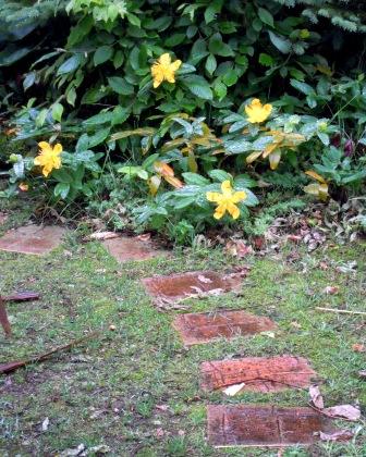 my-garden 028