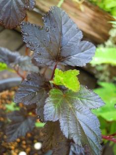 my-garden 033 (2)