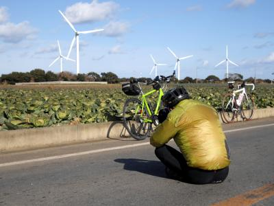 キャベツ畑と風車