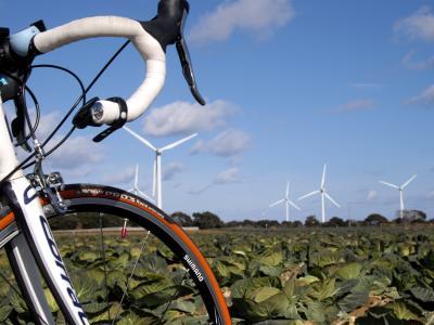 キャベツ畑と風車。