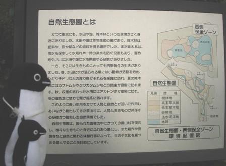東京港野鳥公園3