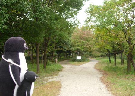 東京港野鳥公園4