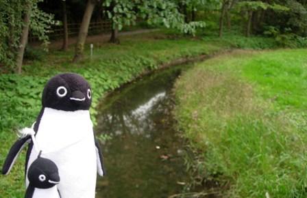東京港野鳥公園5