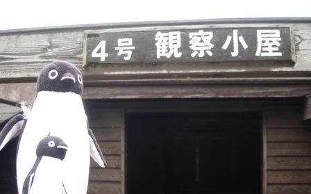 東京港野鳥公園11