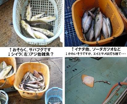 お魚(総合)