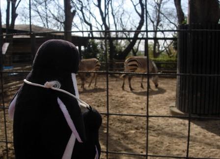 夢見が崎動物公園6