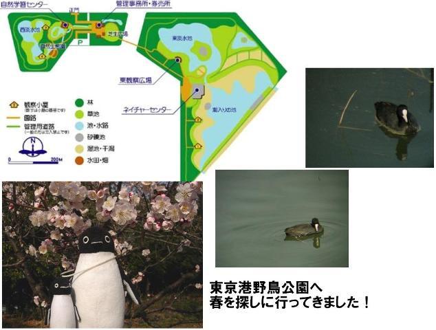 野鳥公園案内図