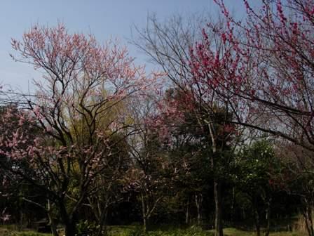 春の野鳥公園3