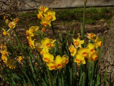 春の野鳥公園8