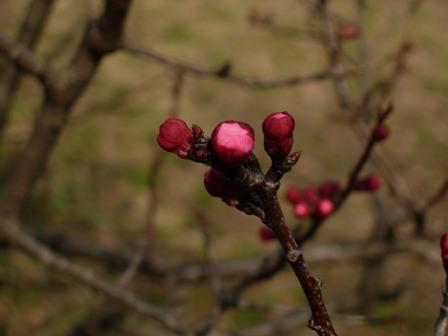 春の野鳥公園9
