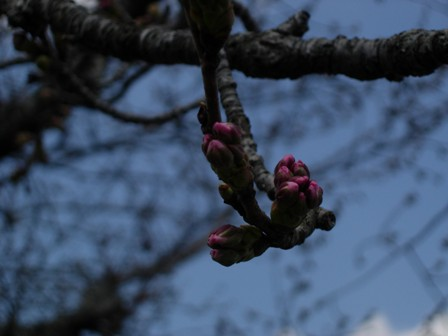 房総の春は2