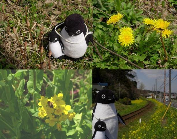 房総の春(菜の花、たんぽぽ、つくし)