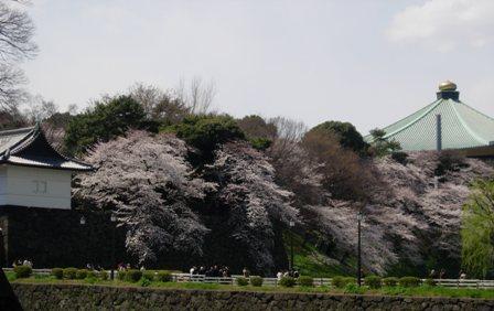 東京の春2