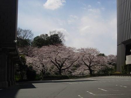 東京の春4