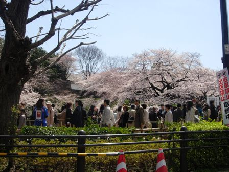 東京の春5