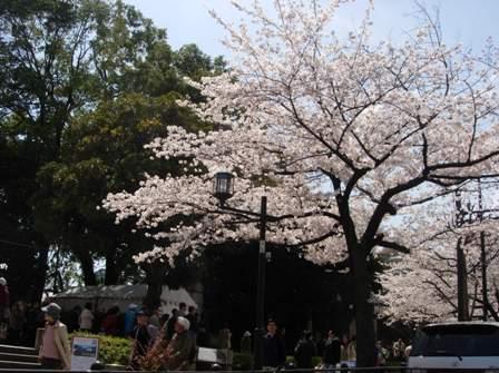 東京の春6