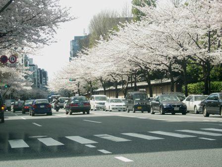 東京の春8