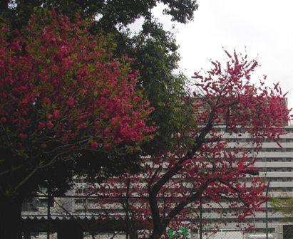 東京の春9