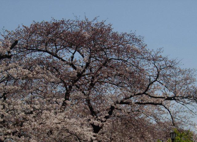 東京の春7