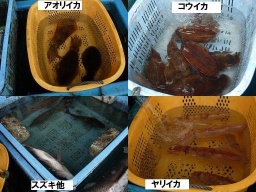 2012.4佐島朝市 水揚げ物