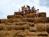 Alstede Farm6