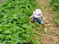 Alstede Farm13