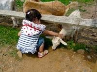 Alstede Farm11