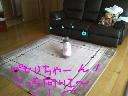 SN3K0201.jpg