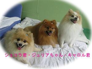 2010-06-30_2221K様宅3匹