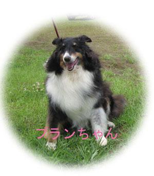 2010-07-04_2261プランちゃん