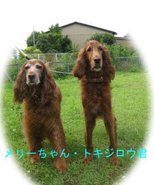2010-07-10_2417メリーちゃん
