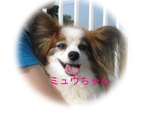 2010-07-10_2467ミュウちゃん