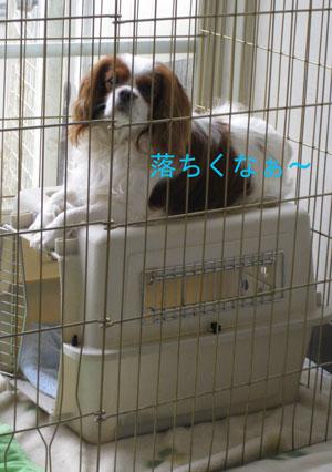 2010-07-10_245クリーム君2