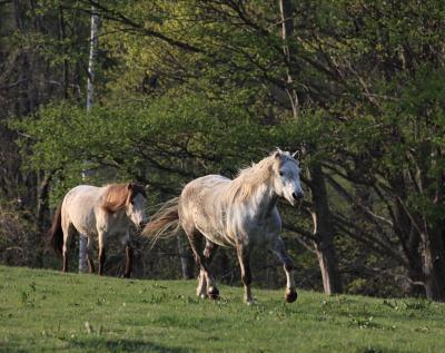 horse3000