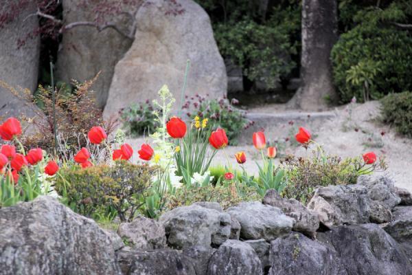 IMG_1423お花