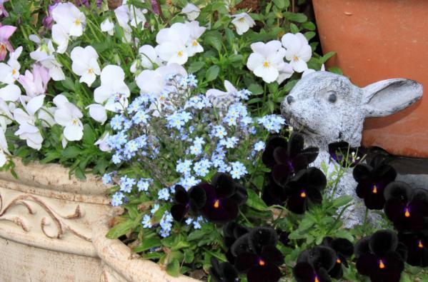 IMG_1442花とウサギs