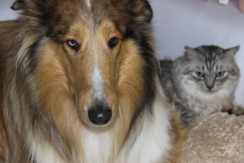 IMG_6511猫は友達であり家族