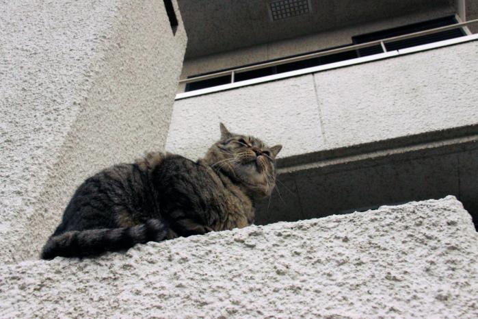 IMG_7150お出迎え猫