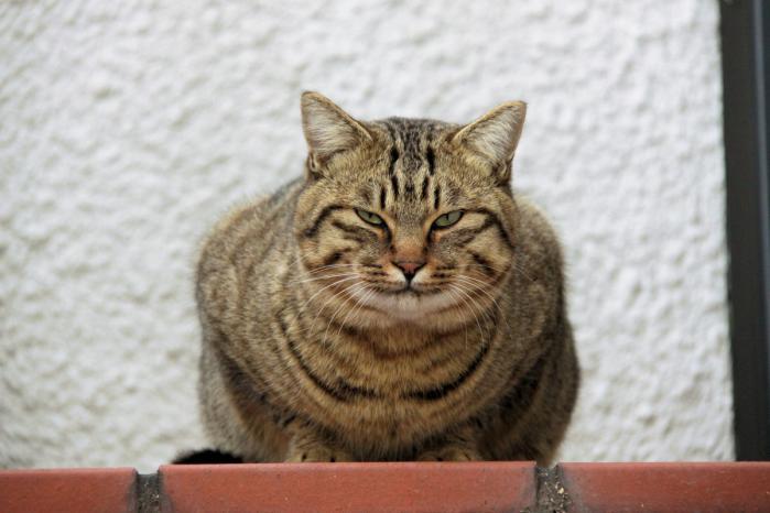 IMG_7157お出迎え猫
