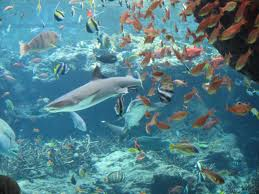 【沖縄】美ら海水族館1