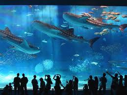 【沖縄】美ら海水族館3