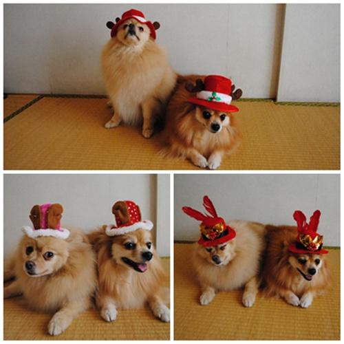 cats2_20111205203145.jpg