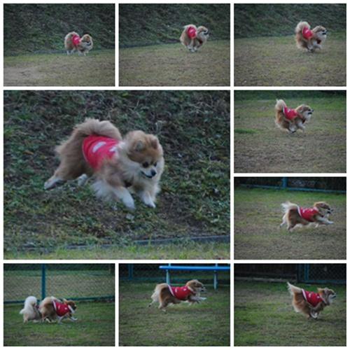 cats2_20111223123524.jpg